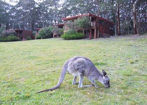 Jenolan Caves Cottages - Casino Accommodation