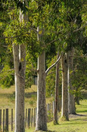 Stringybark Cottages - Casino Accommodation