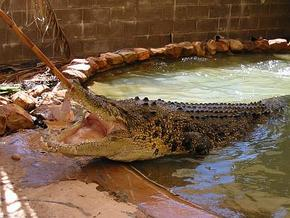 Wyndham Zoological Gardens and Crocodile Park - Casino Accommodation
