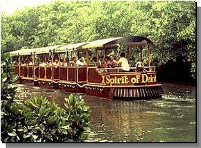 Daintree Rainforest River Trains - Casino Accommodation