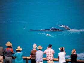 Whale Watching At Head Of Bight - Casino Accommodation