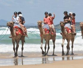 Camel Rides with Coffs Coast Camels - Casino Accommodation