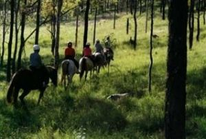 Hunter Valley Horse Riding and Adventures - Casino Accommodation