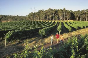 Margaret River Caves Wine and Cape Leeuwin Lighthouse Tour from Perth - Casino Accommodation