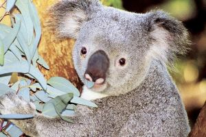 Perth Zoo General Entry Ticket and Sightseeing Cruise - Casino Accommodation