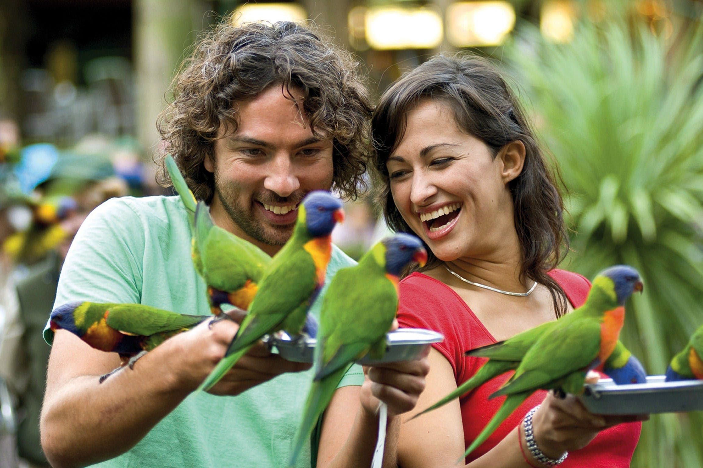 Currumbin Wildlife Sanctuary - Casino Accommodation