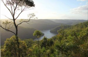 Great North walk - Berowra Valley National Park - Casino Accommodation