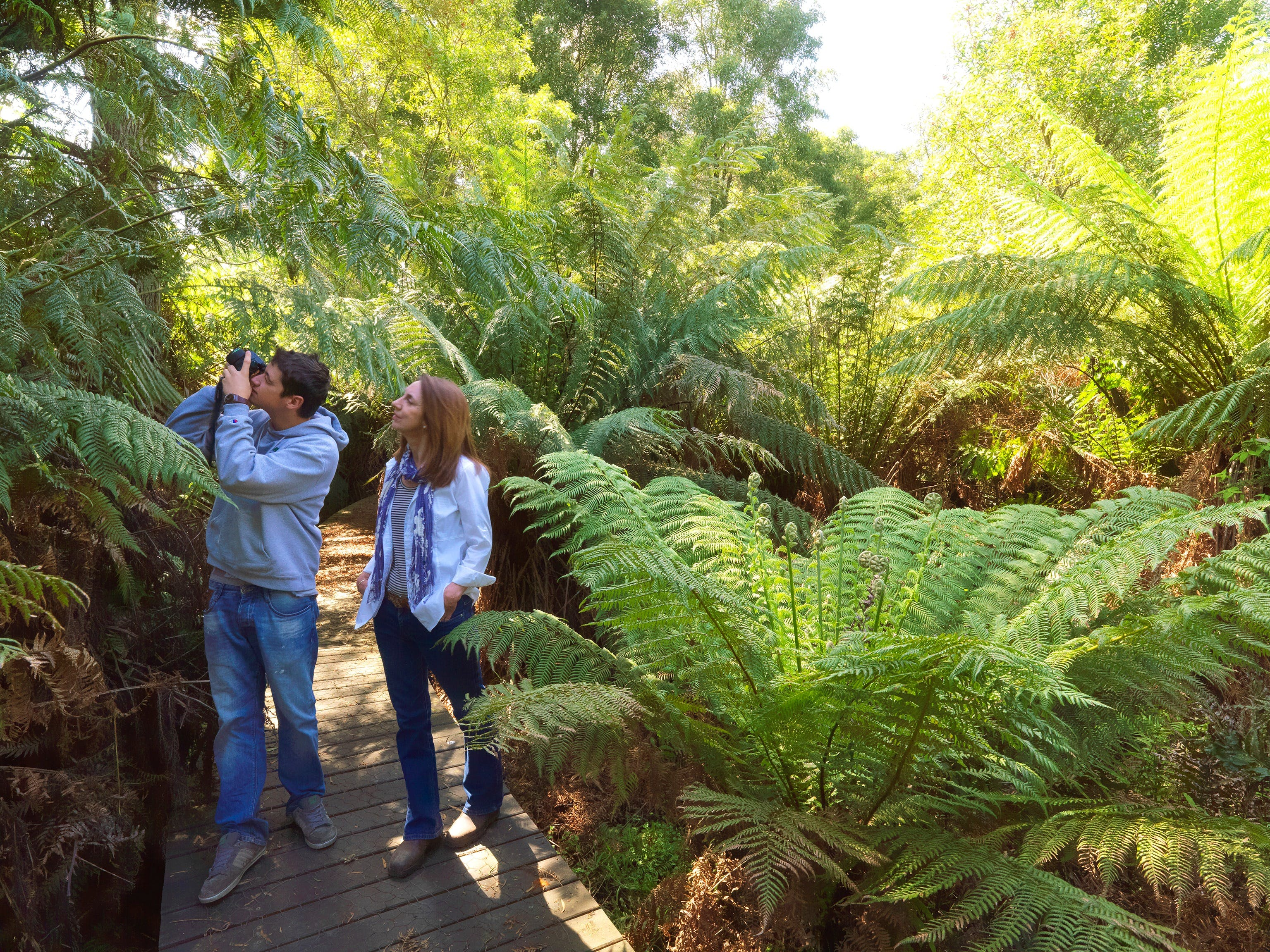 Endeavour Fern Gully Walks - Casino Accommodation
