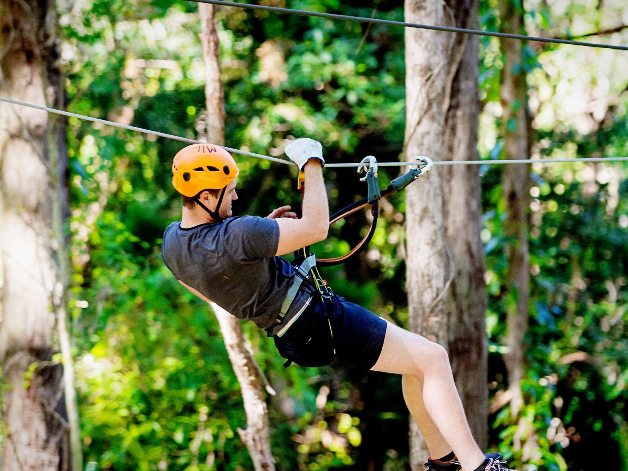 TreeTop Challenge Currumbin Wildlife Sanctuary - Casino Accommodation