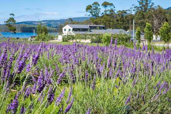 Port Arthur Lavender - Casino Accommodation
